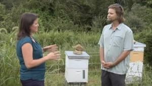 Reed interviewed regarding bees